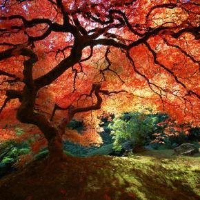 L'unione in Natura va oltre la vita e lamorte